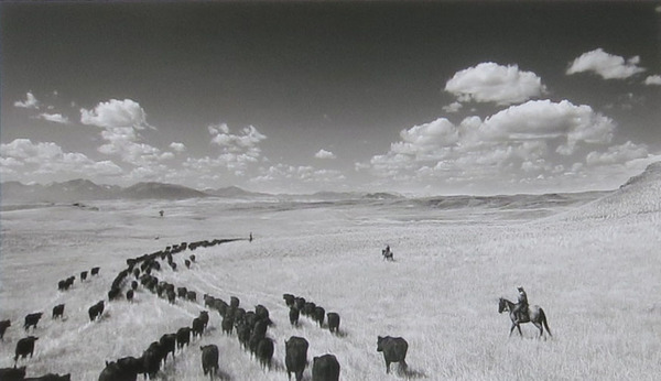 Barbara Van Cleve - Cow Country border=