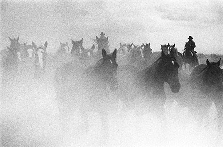 Barbara Van Cleve - Ghost Horses border=