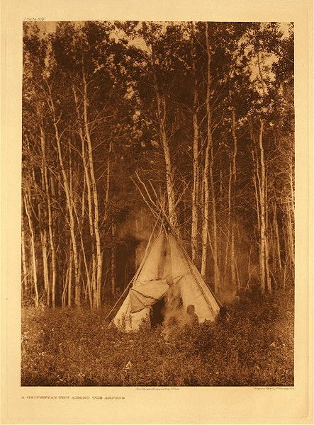 Edward S. Curtis - Plate 616 Chipewyan Tipi among the Aspens border=