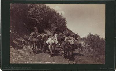 Title: Burro Pack Train on Aspen Mountain , Date: 1890 , Size: 5 x 8 inches , Medium: Vintage Boudoir Card , Edition: Vintage