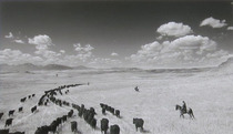 Title: Cow Country , Size: 14 1/4 x 23 inches , Medium: Silver Gelatin Photograph , Signed: L/R , Edition: 13/125
