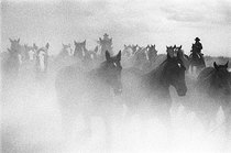 Title: Ghost Horses , Date: 2003 , Size: 13 x 19 3/8  inches , Medium: Silver Gelatin Photograph , Signed: L/R , Edition: 114/125