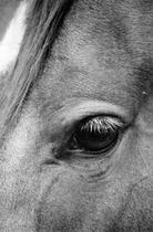 Title: A Kind Eye , Date: 2001 , Size: 23 1/8 x 15 5/8 inches , Medium: Silver Gelatin Photograph , Edition: 7/125