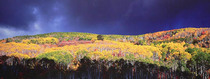 Title: Autumn Tempest , Size: 20 x 50 inches image , Medium: Cibachrome Photograph , Signed: L/R , Edition: #42