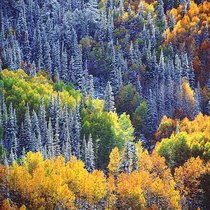 Title: Snowy Mountainside, Aspens and Sunlight , Size: 20 x 20 inches , Medium: Cibachrome Photograph , Edition: #40
