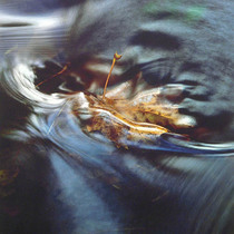 Title: Maple Leaf in Stream , Size: 20 x 20 inches , Medium: Cibachrome Photograph , Signed: L/R , Edition: #19