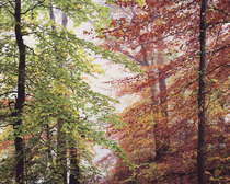 Title: Peaceful Autumn Forest , Size: 30 x 40 inches , Medium: Cibachrome Photograph , Signed: L/R , Edition: #17
