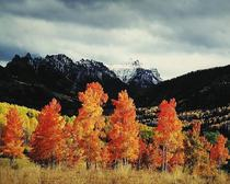 Title: Orange Aspens , Owl Creek , Size: 30 x 40 inches , Medium: Cibachrome Photograph , Signed: Signed , Edition: #56