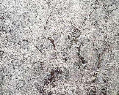 Title: Snow and Cottonwood, Utah , Size: 30 x 40 inches , Medium: Cibachrome Photograph , Edition: #8