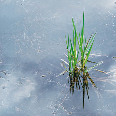Title: Spring Grass and Rainpool, Oregon , Size: 30 x 30 inches , Medium: Cibachrome Photograph , Signed: L/R