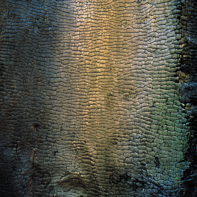 Title: Iridescent Charred Tree, California , Size: 30 x 30 inches , Medium: Cibachrome Photograph , Signed: L/R