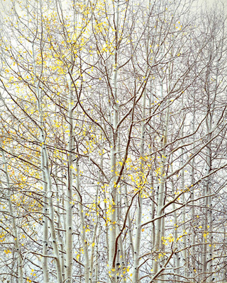 Title: Aspen Ethos , Size: 40 x 30 inches , Medium: Cibachrome Photograph , Edition: #26