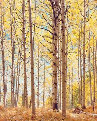 Title: Translucent Forest, Colorado , Size: 40 x 30 inches , Medium: Cibachrome Photograph , Signed: Signed , Edition: #62