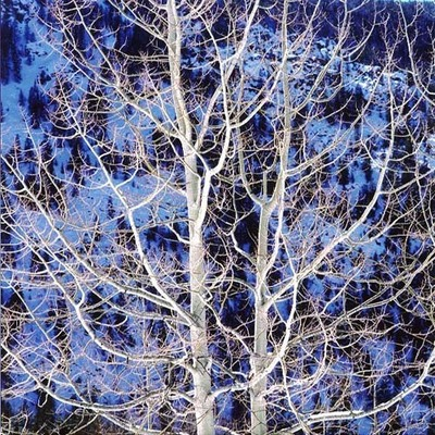 Christopher Burkett - Glowing Winter Aspen, Colorado