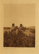 Title: Goldenrod Meadows - Piegan , Date: 1911 , Size: Volume, 12.5 x 9.5 inches , Medium: Vintage Photogravure , Edition: Vintage