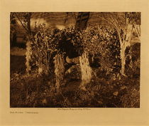 Title: The Altar - Cheyenne , Date: 1910 , Size: Volume, 9.5 x 12.5 inches , Medium: Vintage Photogravure , Edition: Vintage