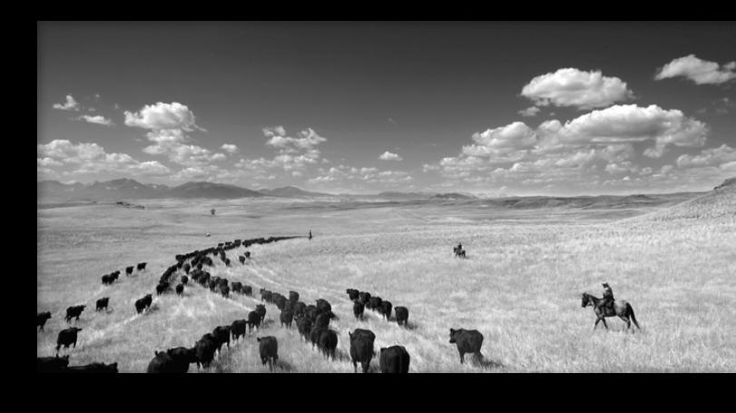 Cow Country, Barbara Van Cleve