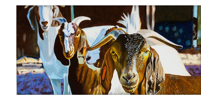 Lamar Goats Dan Coen
