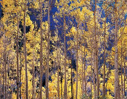 Telluride-Aspens,-Colorado_web